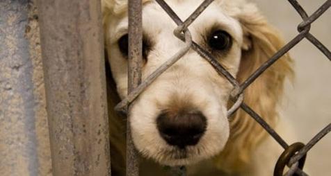 ۷۴ ضربه شلاق مجازات دو حیوان آزار در رضوانشهر