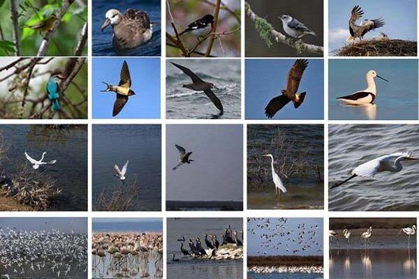 عبور پر خطر پرندگان مهاجر جهان از فراز ایران